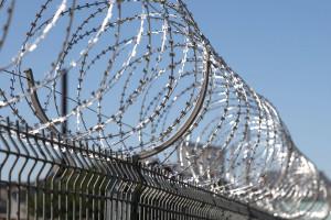 Егоза Стандарт на заборе из сварной сетки