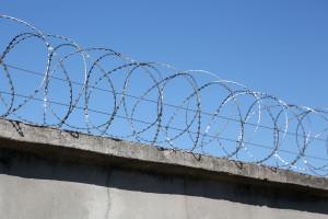Спиральный барьер Егоза Стандарт на бетонном заборе