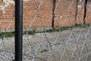 Egoza barbed mesh fence